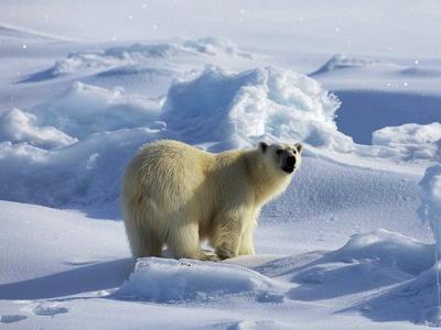北极是指北纬66度34分(北极圈)以北的广大区域,也叫做北极高清图片