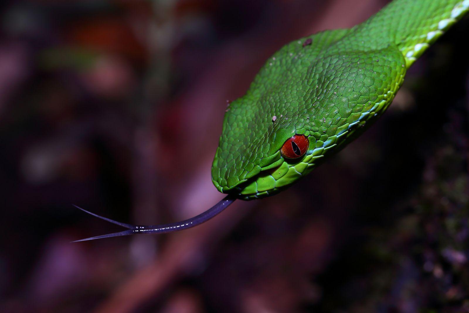毒蛇巨蛇之最,打开蛇的隐秘神奇世界!
