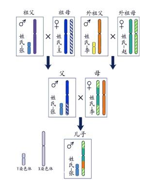 姓氏和Y染色体的传递(《姓氏与Y染色体》)