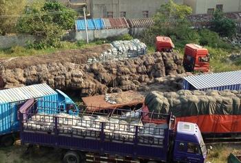 制毒原料麻黄草被成车的运往博社村。