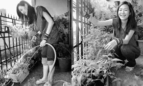 """张悬在自家阳台上种起了""""放心菜"""""""