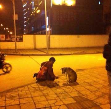 狗陪伴着流浪汉(图片来自网友菟阿七)