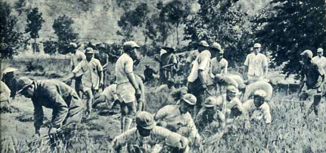 红军在战斗间歇帮助老百姓收割庄稼。