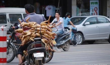 爱狗人士认为玉林狗肉节的狗,来源有问题