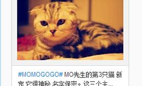 张默微博上有许多猫的照片,满满都是爱。