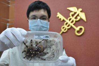 检疫部门查获的毒蜘蛛