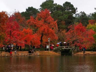 12月15号周日苏州梦之旅金鸡湖休闲徒步