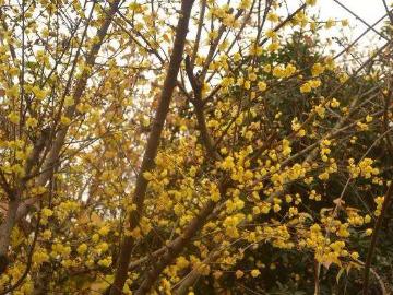 3月4号周日登紫金山徒步明孝陵梅花山赏梅