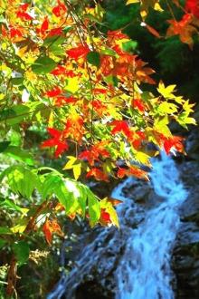 12月25走进流枫溪爬山野炊看枫叶加泡天然温泉