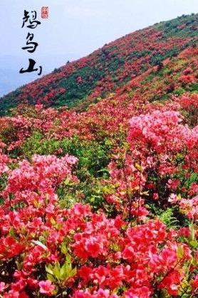 4月9日周日登顶鸬鸟山,赏漫山映山红[浙江余杭]