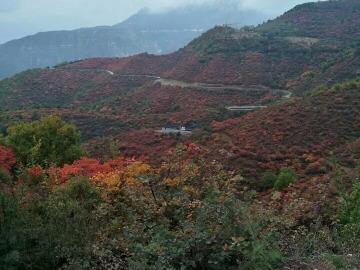 11月10号周五邢台仙界山赏红叶一日游