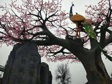 常宁樱花园一日游首发99元/位