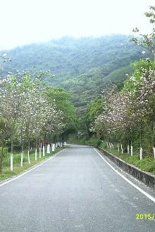 2.26黄山鲁森林公园踏青摄影请报名