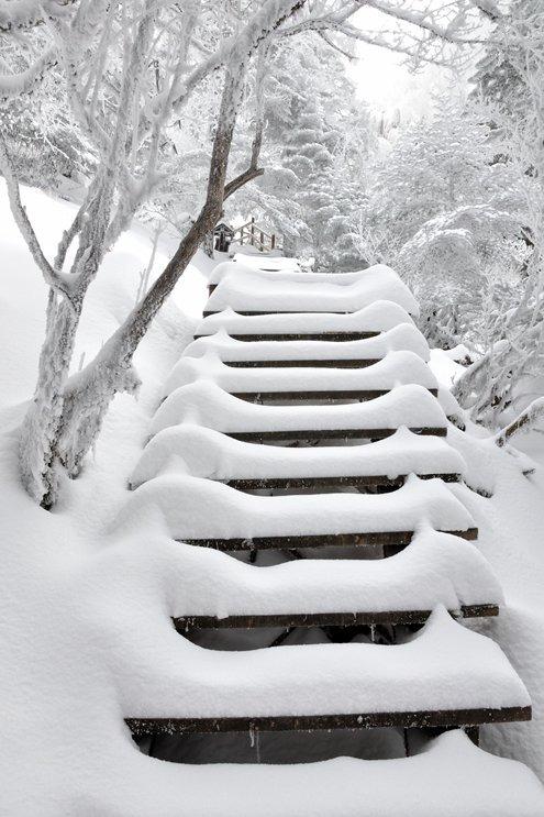 2月23-26日云南油菜花、雪山4日游