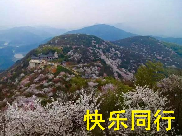 3月16日葛仙山樱花峡谷赏万亩花海一日游