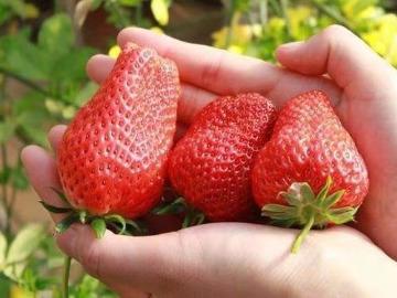 三月三去西山 50元一天游赏梅花 送草莓