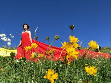 6月27日邀您花海小道仙女沟徒步赏景一游