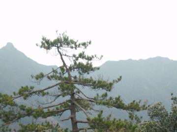 2月12日星期天临海武坑象鼻山山脊爬山