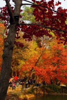 天平山漫步看枫叶