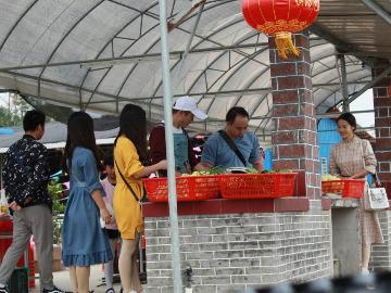 国庆十一横沥农庄自助柴火饭聚餐户外活动