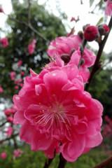 爱要大声说出来青山赏花相亲活动