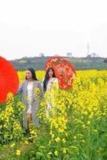 骑游活动:新民高祖庙风车油菜花节领生态大米咯!