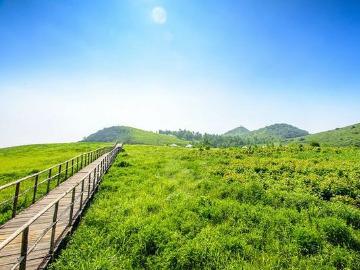 野蘑菇7月1日云中草原一日游