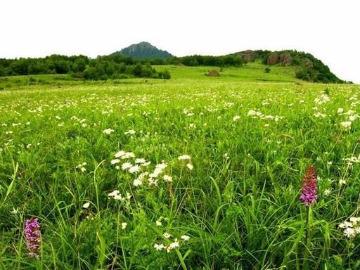 野蘑菇5月21日百花山一日游