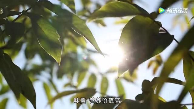 云南跳菜核桃