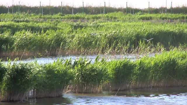 曹妃甸湿地视频
