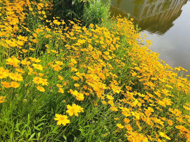 梦见河边有很多小草? 梦见小草发芽意味着什么
