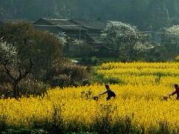 靖安三爪仑国家森林公园踏青一日游