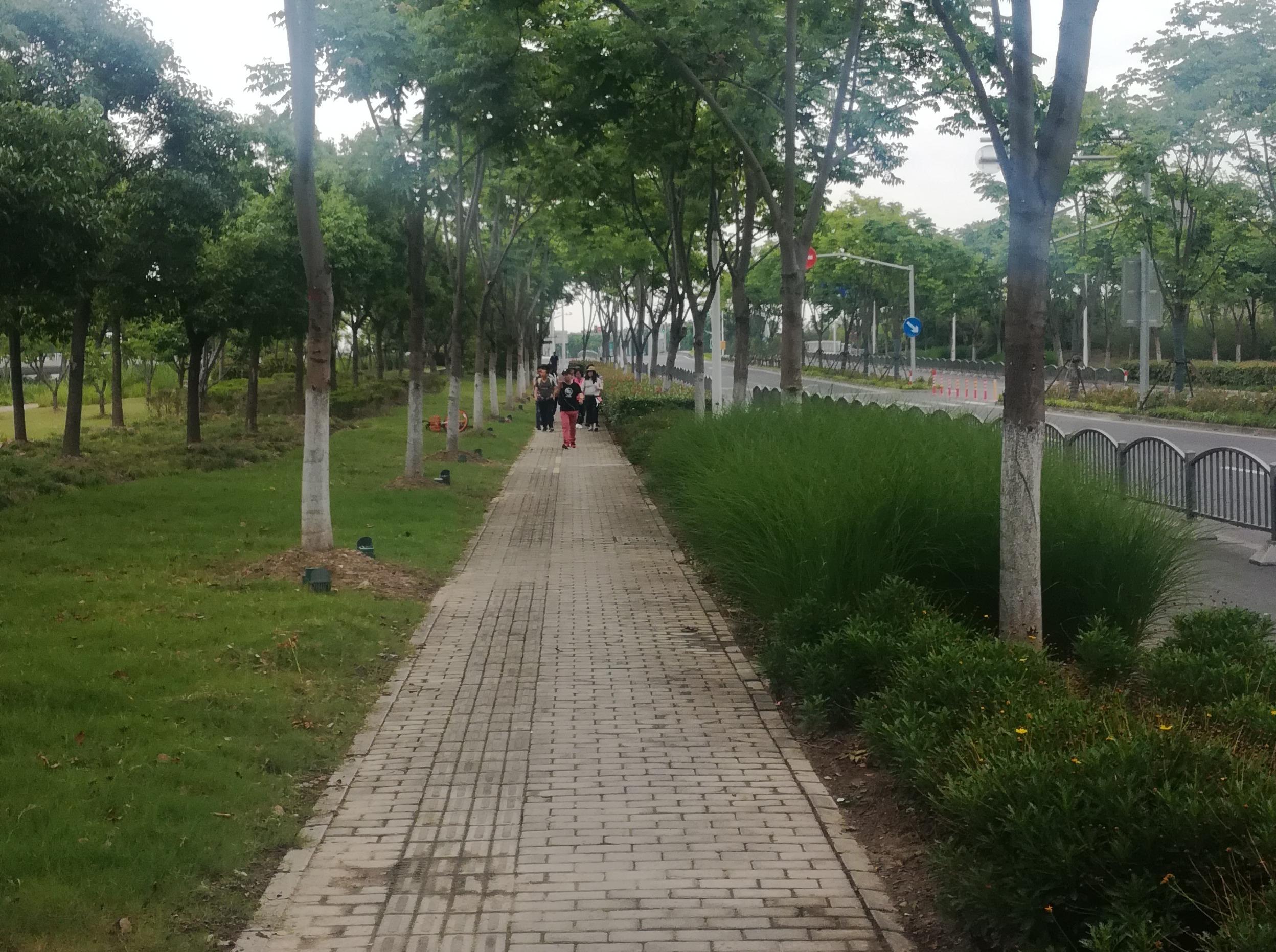 6月7日 东方绿洲地铁站到练塘古镇徒步