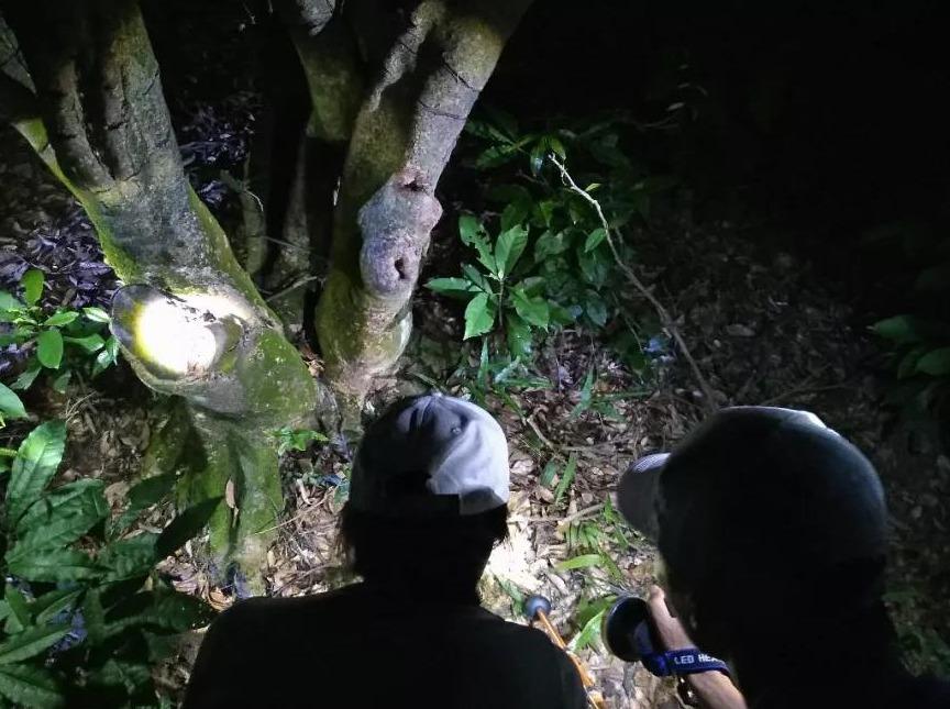 【自然探索】童趣夜观,探索夜晚的昆虫世界