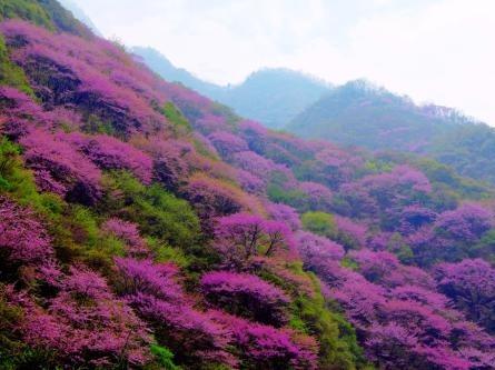 4月15日 赏太平山水 观万亩紫荆花海