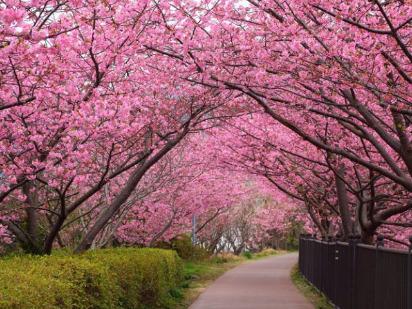 杖锡赏花之旅,感受满树烂漫如云似霞