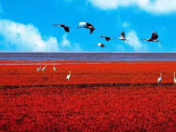 8.24-8.26红海滩浪漫休闲之旅