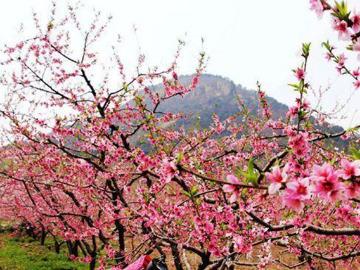 4月03号 周三 平谷桃花节一日休闲游