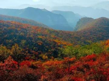 周日青天河景区看红叶