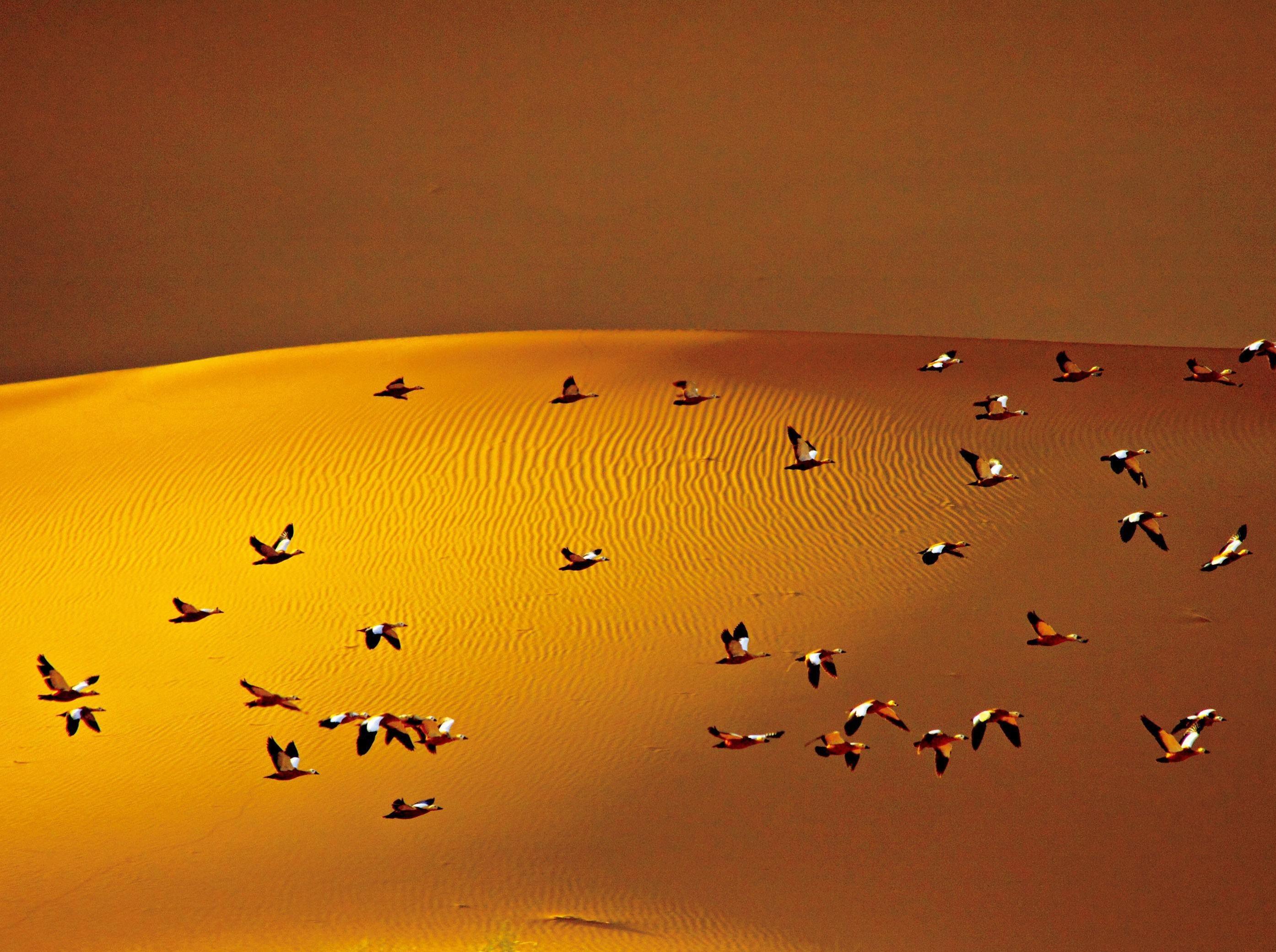 腾格里大漠观候鸟南迁-徒步探秘之旅
