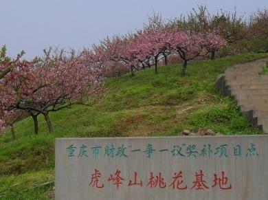 重庆曾家虎峰山赏花