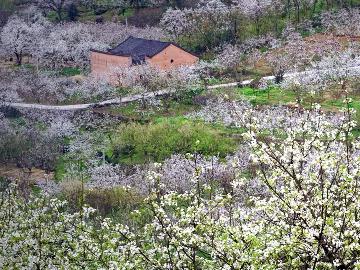 3月25日山水群游灌阳赏桃李芬芳梨花似雪