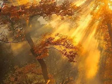 3日周日茶辽环穿,看层林尽染