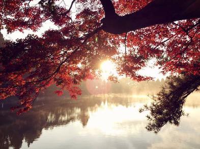 25日庐山东西穿越看红叶