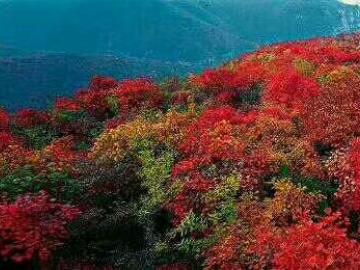 邀您一起赏红叶!