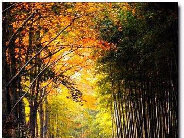 17日杭州长乐林场、娘娘山徒步登山
