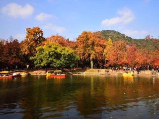 11.23 灵天线休闲爬赏红枫叶活动