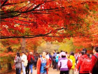11.24 徒步南京栖霞山赏红枫叶一日游
