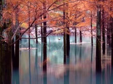 12月15日徒步雪窦岭古道,网红水森林