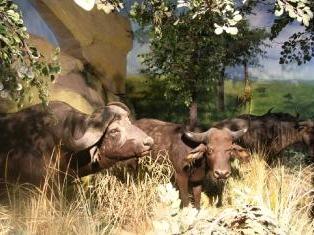 黄岛世界动物标本艺术馆门票优惠60元